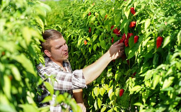 Martin Pokorney geht durch sein Chiligarten