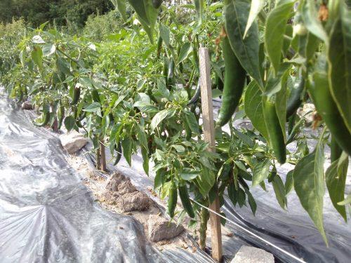 fertig bepflanztes Beet
